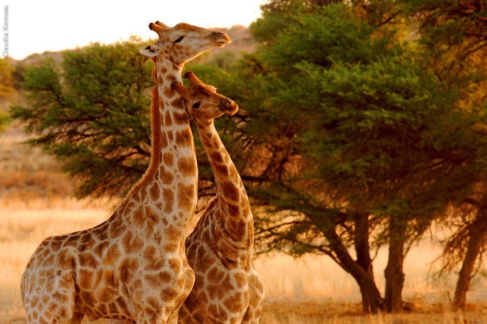 Fav_Africa_01