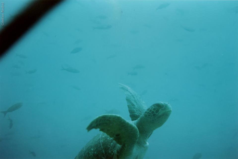 2001_Galapagos_CAN_24_cidadaos