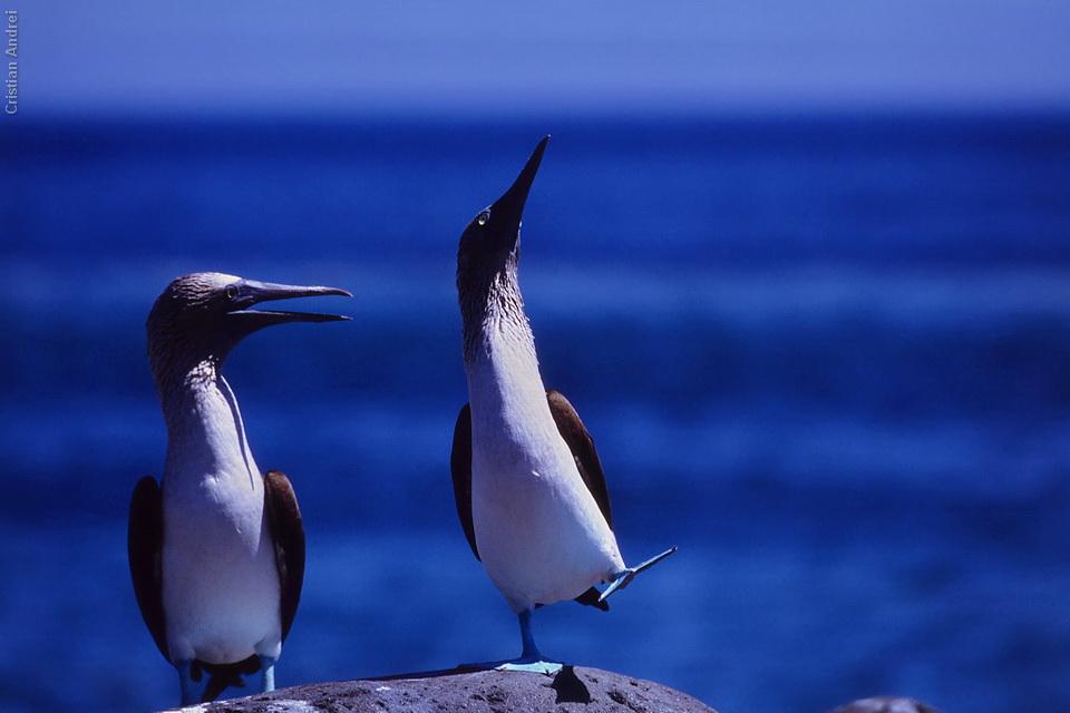 2001_Galapagos_CAN_29_cidadaos