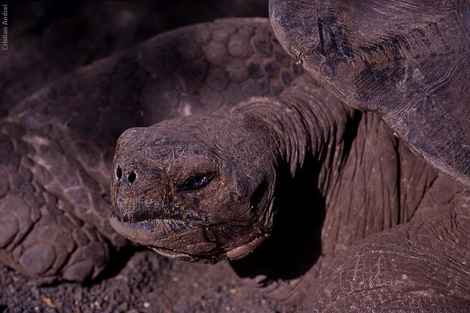 2001_Galapagos_CAN_36_cidadaos