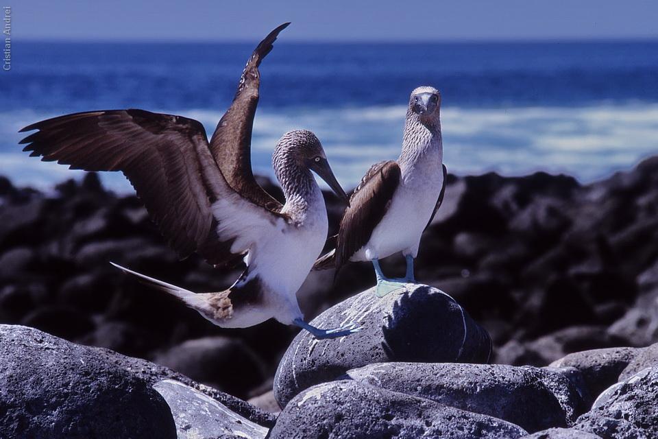 2001_Galapagos_CAN_38_cidadaos