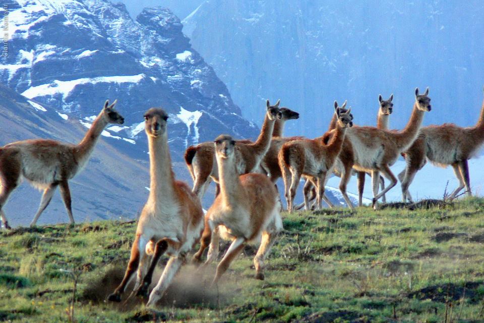 2005_Patagonia_CKO_05_cidadaos