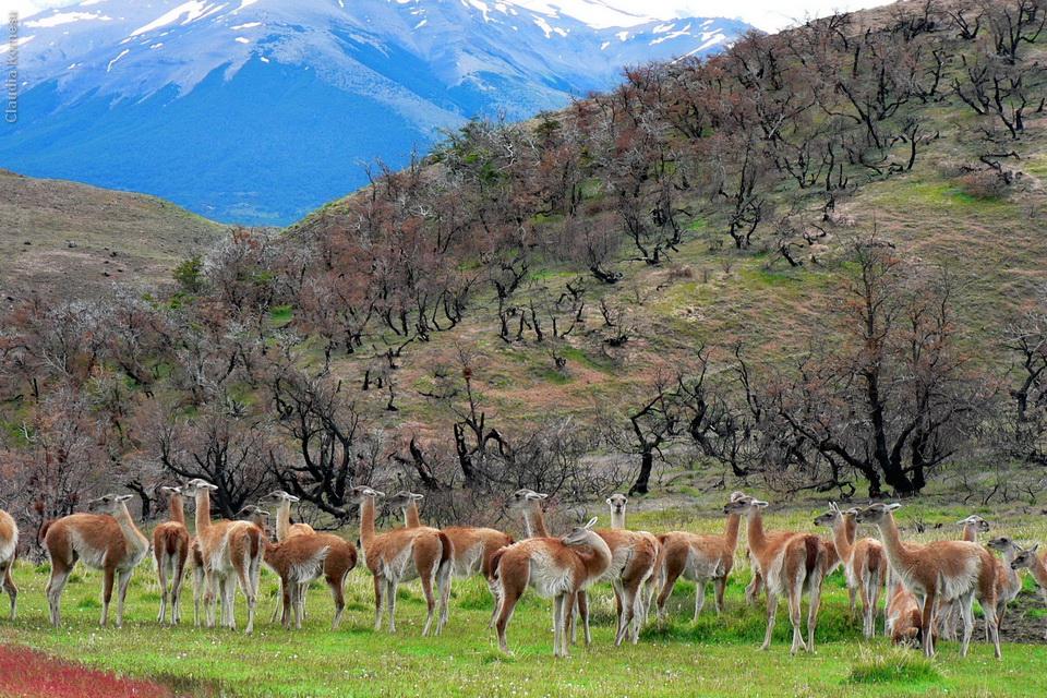 2005_Patagonia_CKO_06_cidadaos