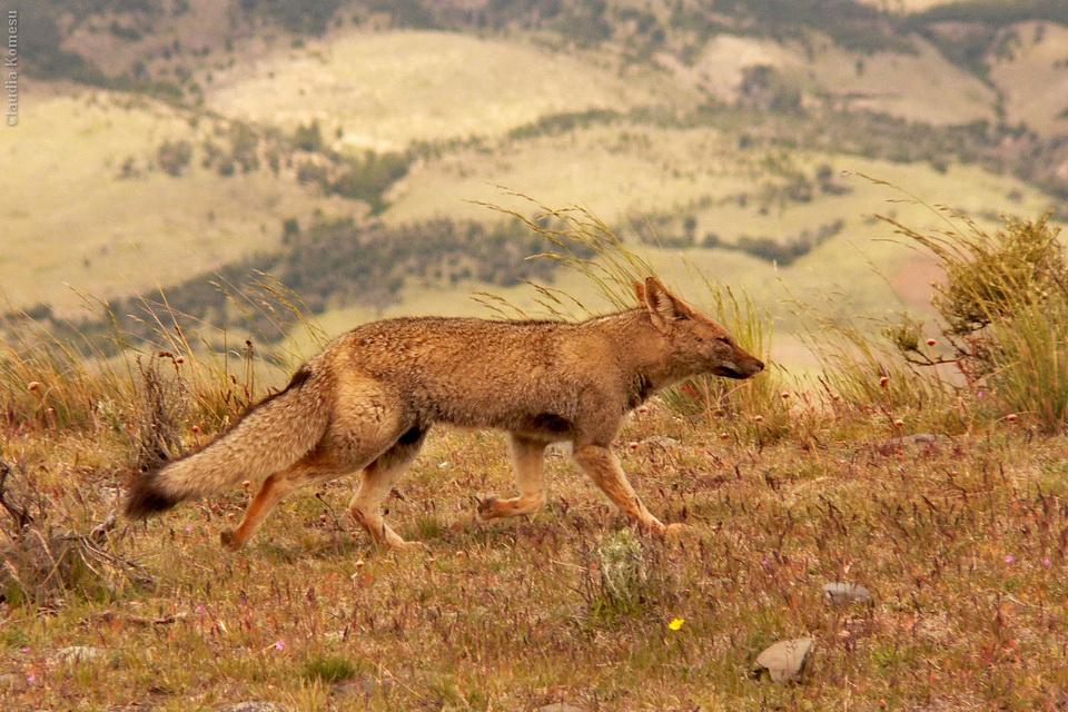 2005_Patagonia_CKO_18_cidadaos
