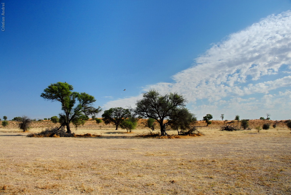 2006_Africa_CAN_04