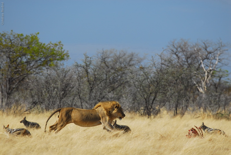 2006_Africa_CAN_35