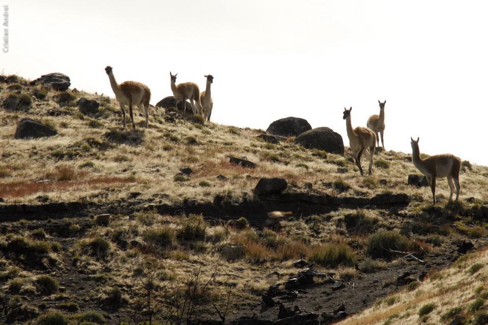 2007_Patagonia_CAN_08_cidadaos