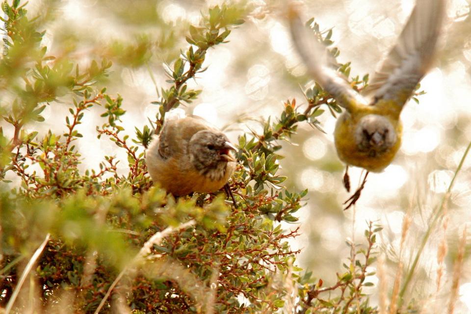 2007_Patagonia_CKO_01_cidadaos