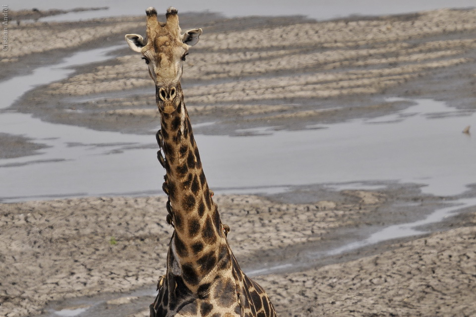 2008_Africa_CAN_06
