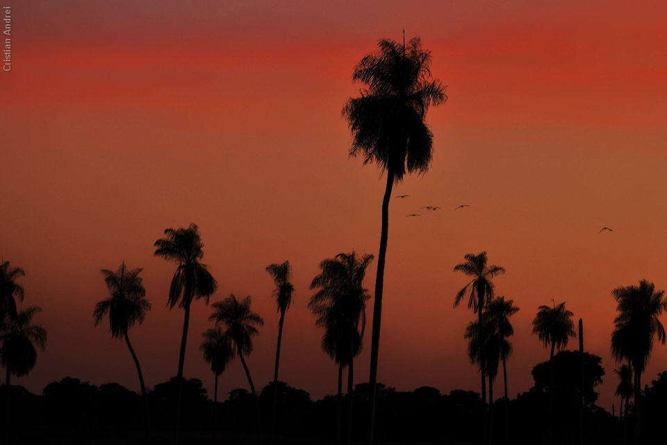 2008_Pantanal_CAN_02_onde
