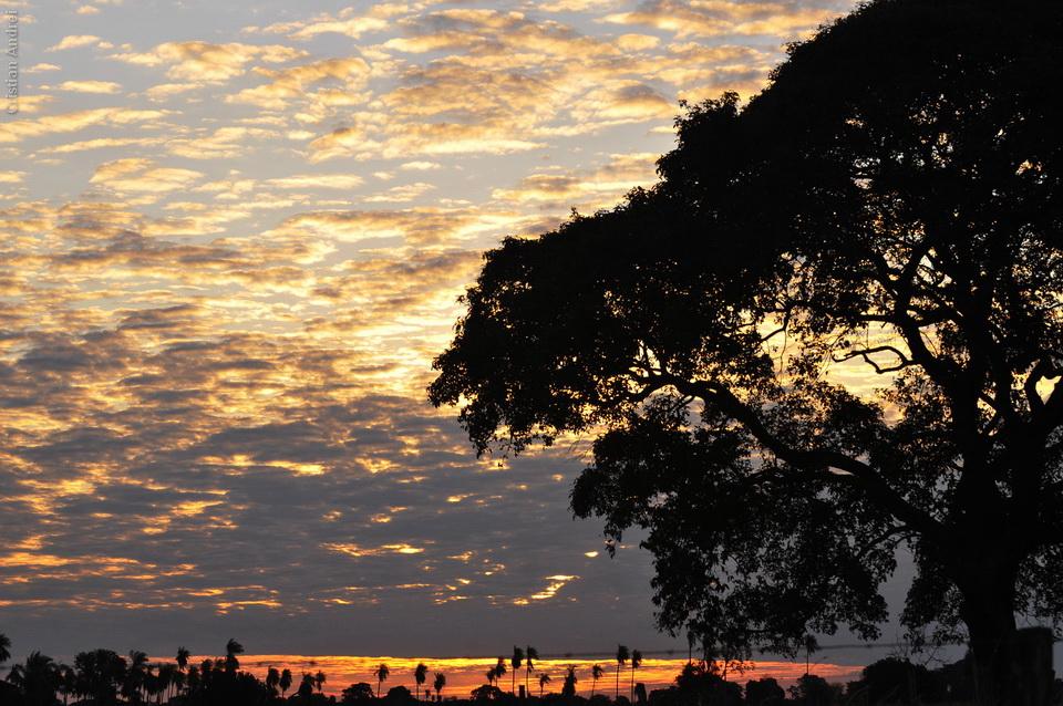 2008_Pantanal_CAN_30_onde