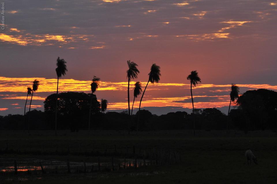 2008_Pantanal_CAN_31_onde