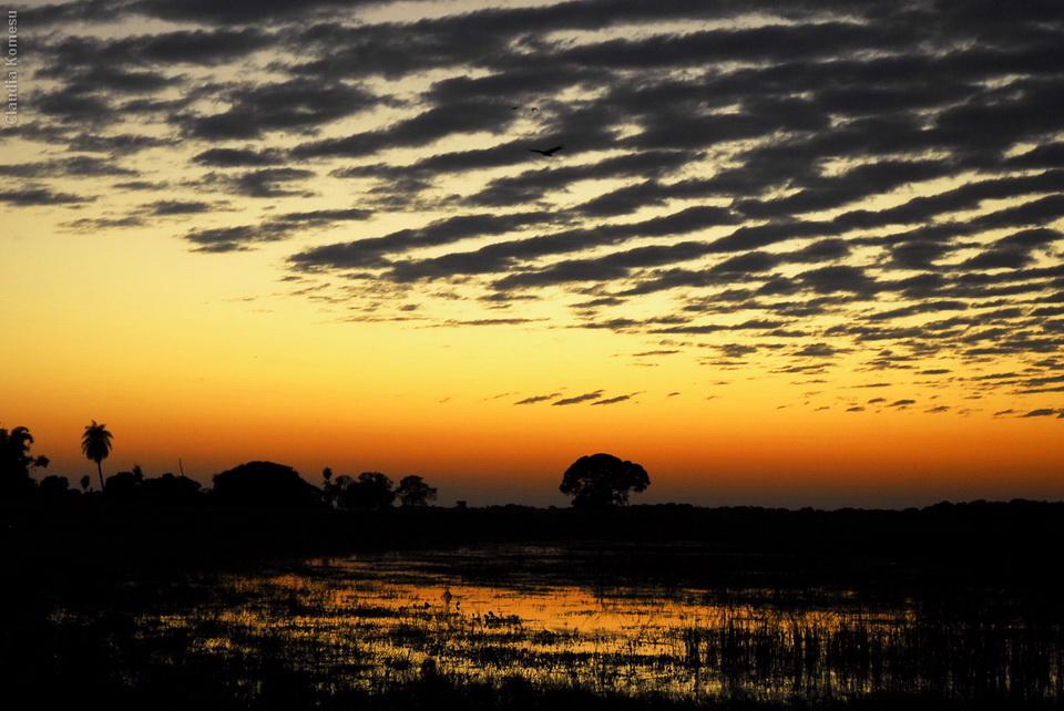 2008_Pantanal_CKO_23_onde