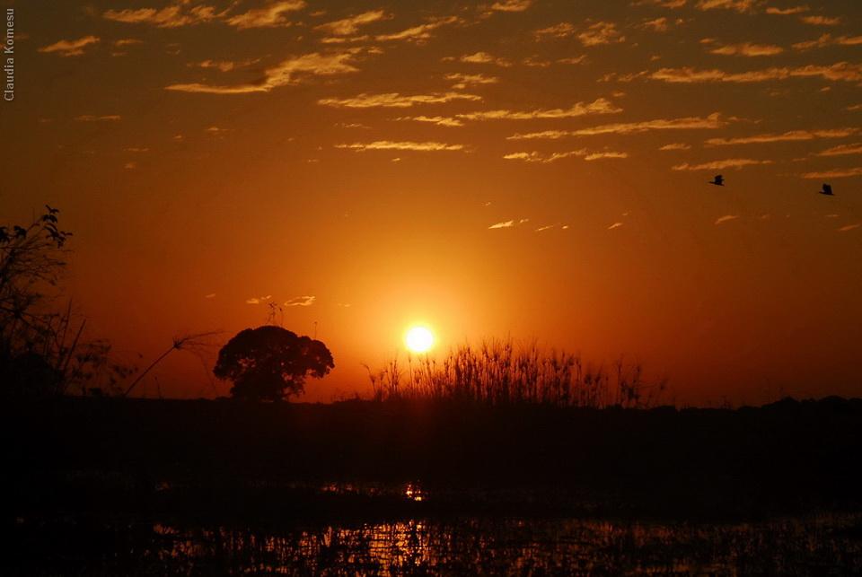 2008_Pantanal_CKO_24_onde