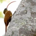 Pantanal – Campos