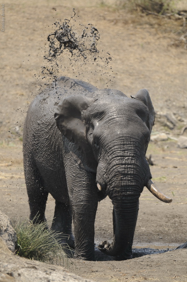 2010_Africa_CAN_03
