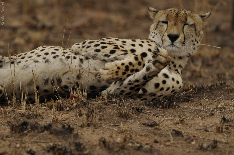 2010_Africa_CAN_07