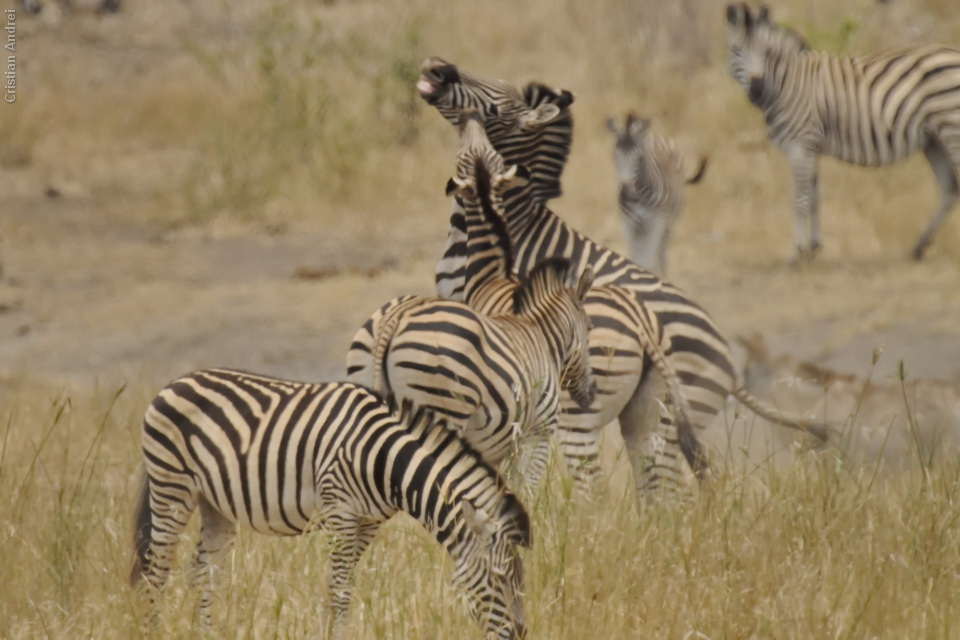 2010_Africa_CAN_19