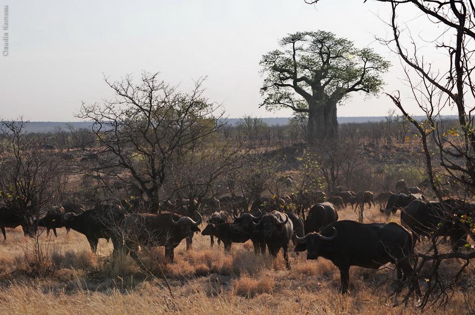 2010_Africa_CKO_33