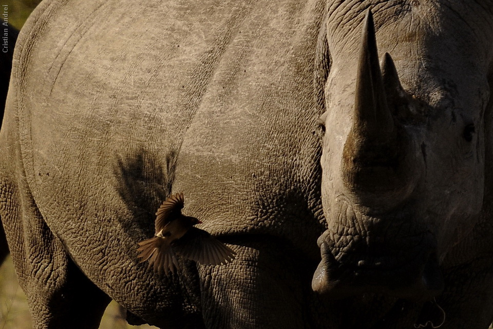 2011_Africa_CAN_12
