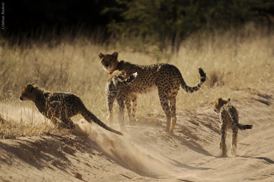 2011_Africa_CAN_46