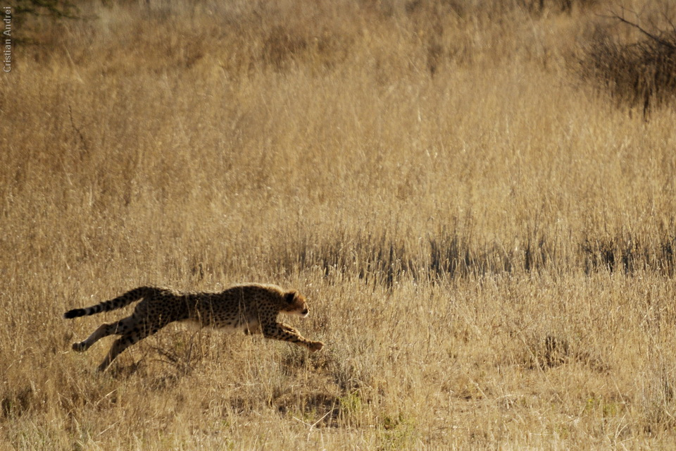 2011_Africa_CAN_47