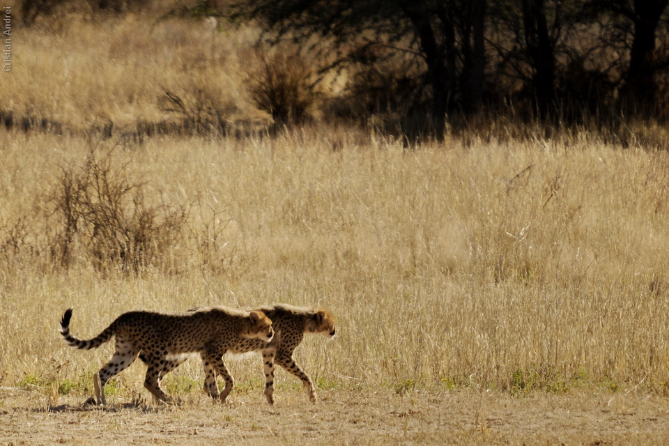 2011_Africa_CAN_48