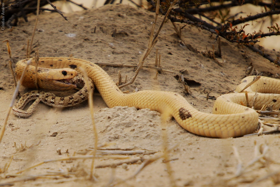 2011_Africa_CAN_59