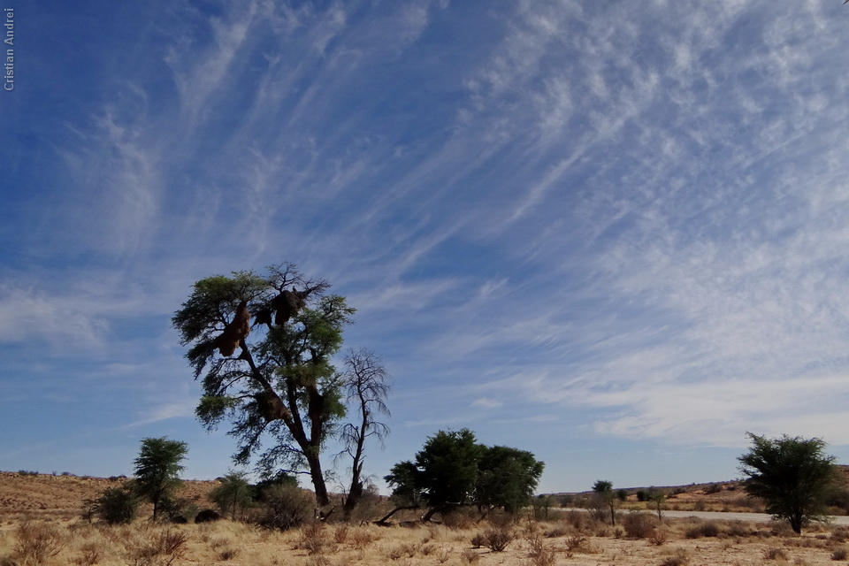 2011_Africa_CAN_68