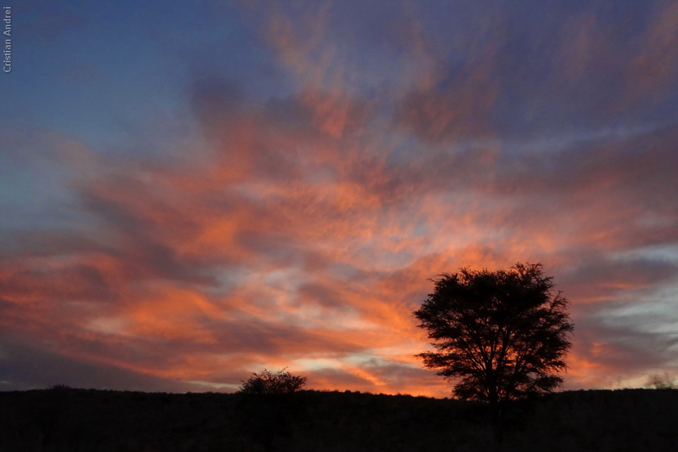 2011_Africa_CAN_72
