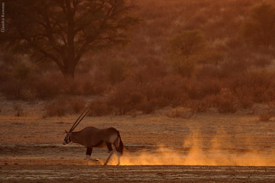 2011_Africa_CKO_75