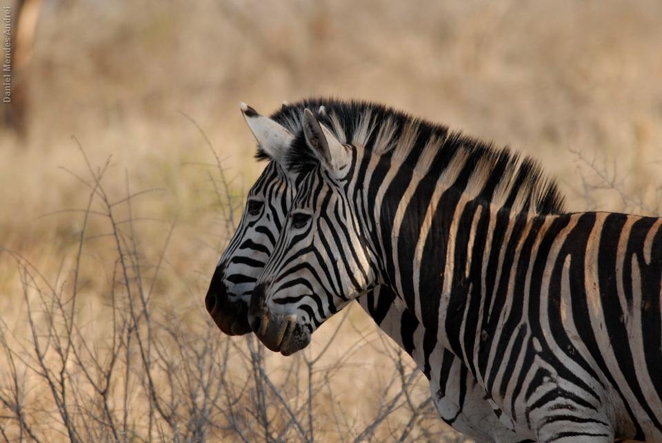 2011_Africa_DAN_10