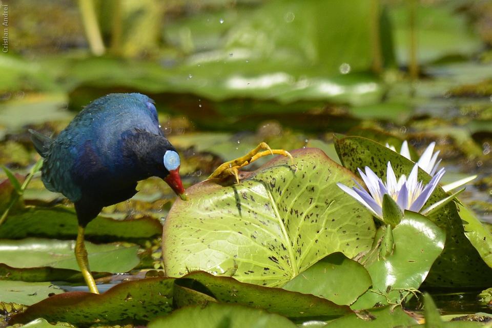 2012_Mata_Atl_CAN_24_agua