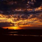 Pantanal – Onde