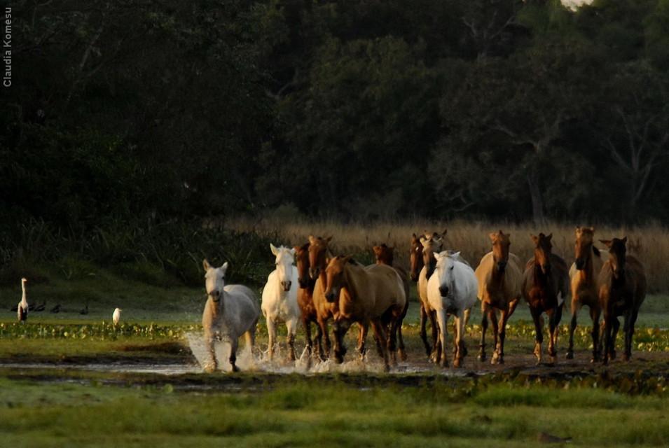 vg_pantanal-2008_03