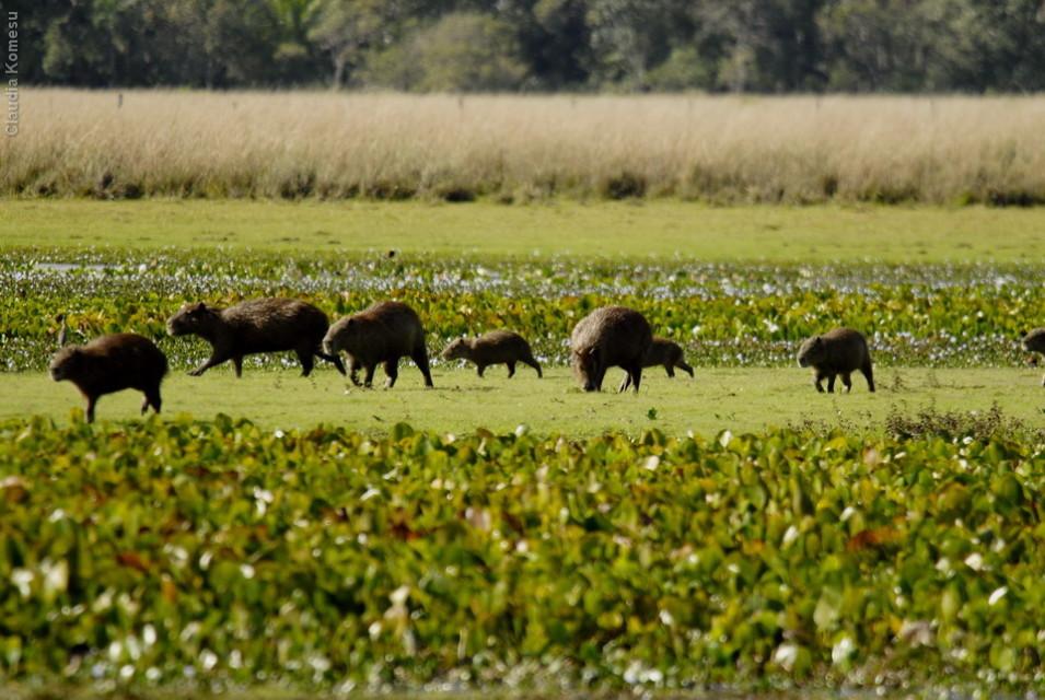 vg_pantanal-2008_05