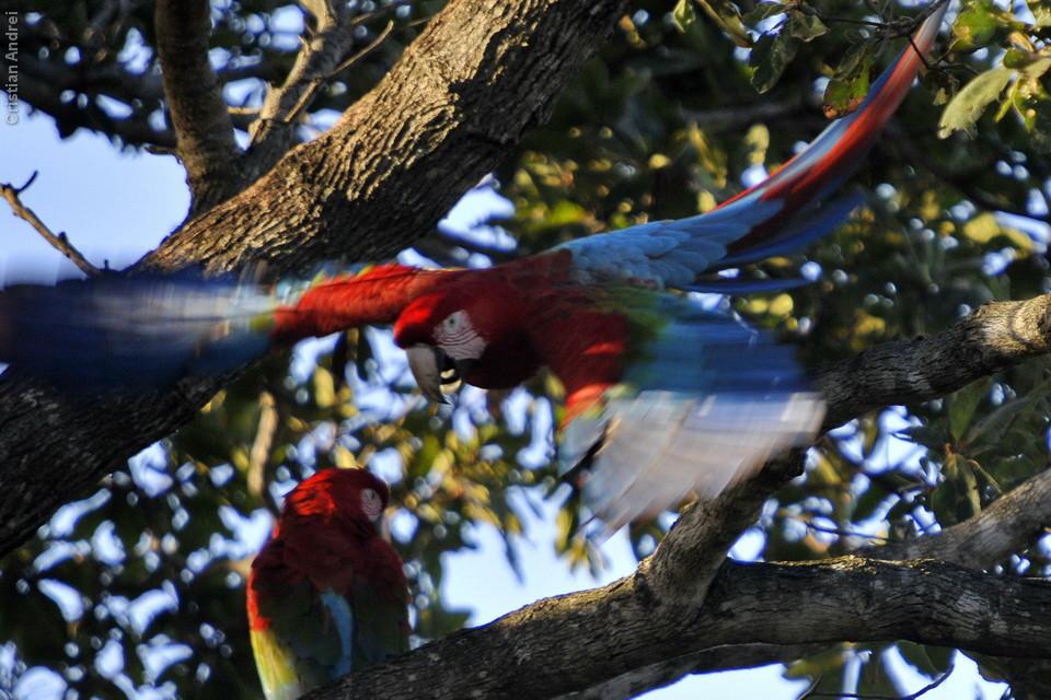 vg_pantanal-2008_07