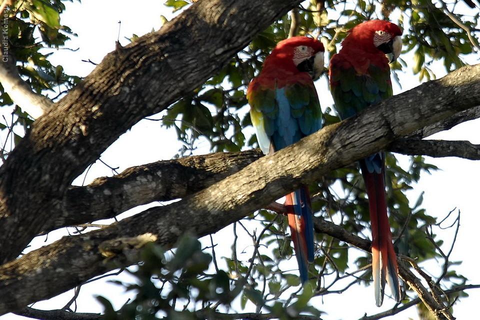 vg_pantanal-2008_08