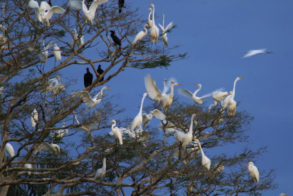 vg_pantanal-2008_12
