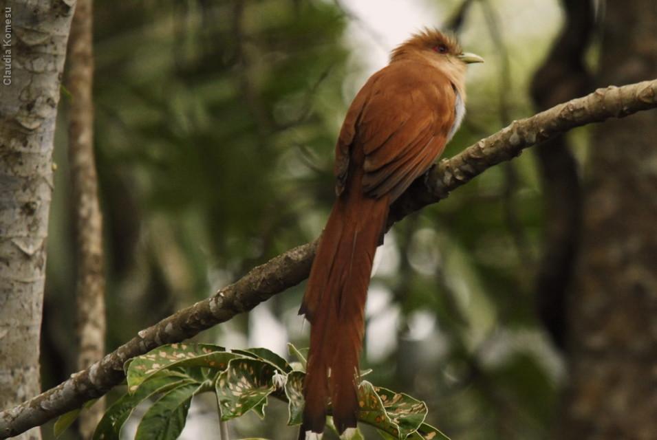 vg_pantanal-2008_15