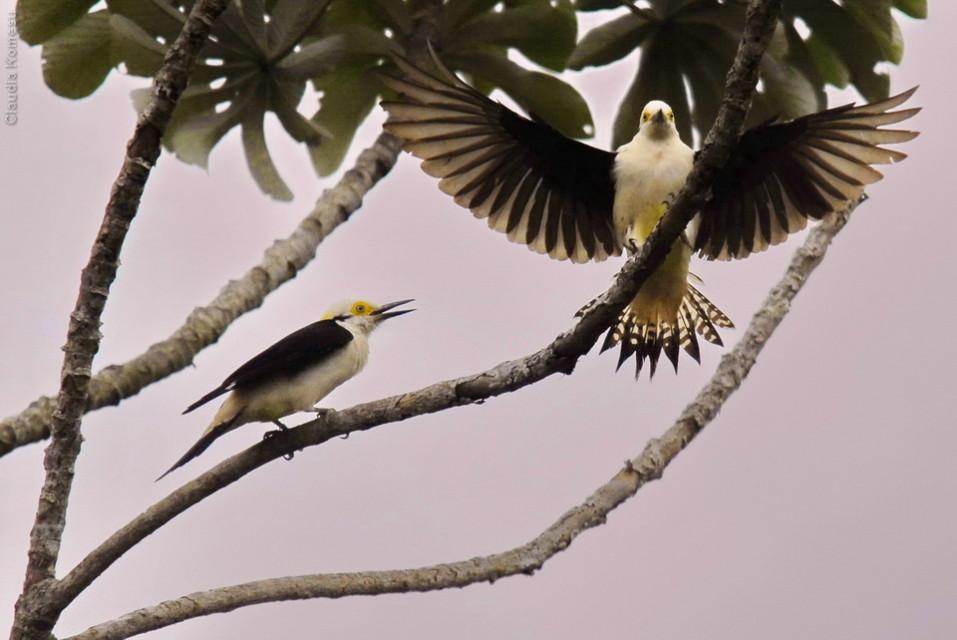 vg_pantanal-2008_17