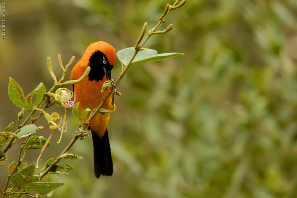 vg_pantanal-2008_19