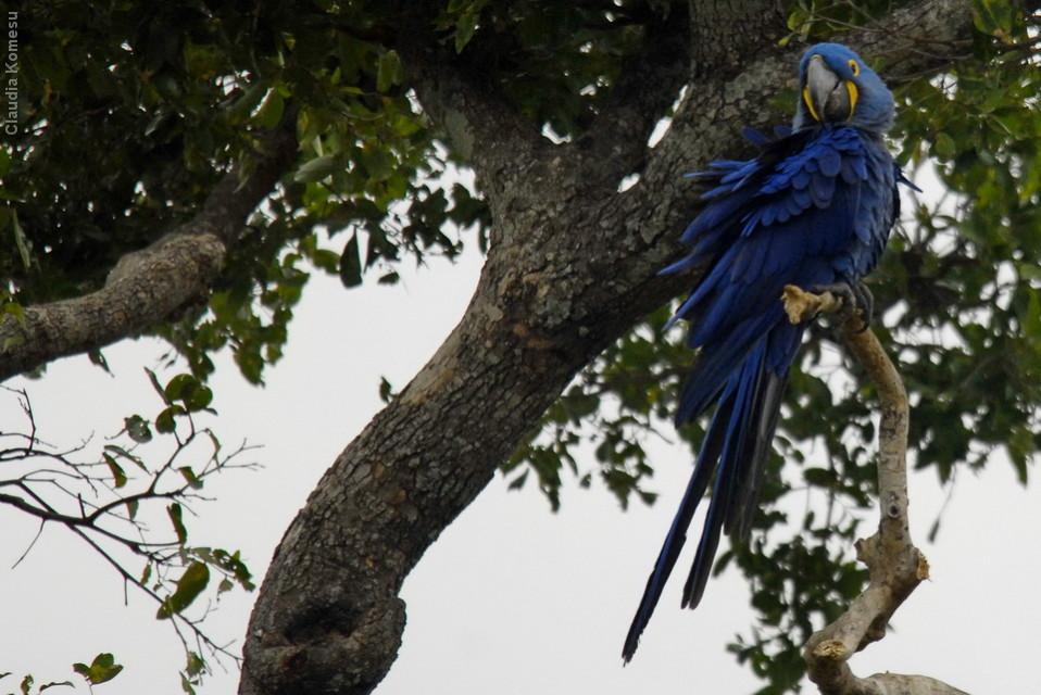 vg_pantanal-2008_20