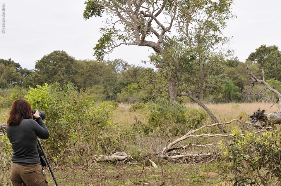 vg_pantanal-2008_22