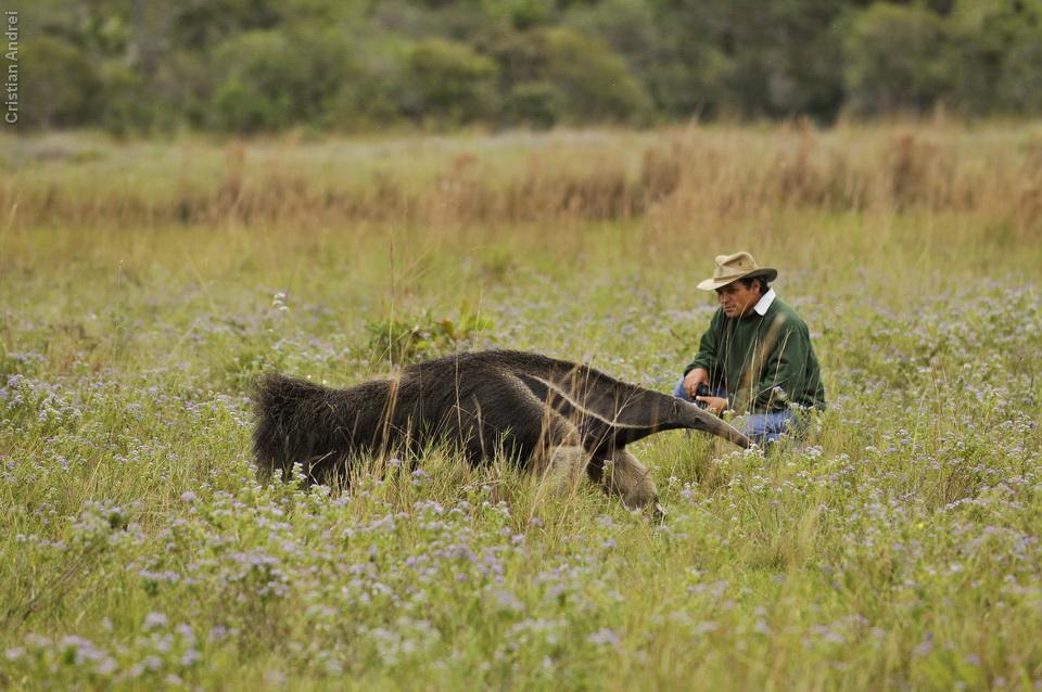 vg_pantanal-2008_24
