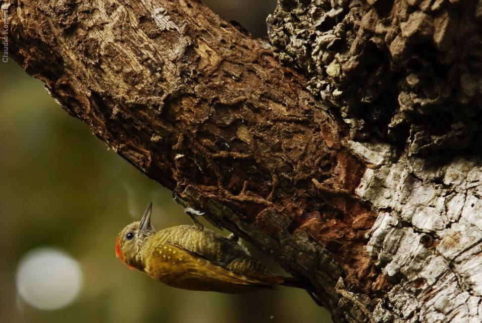 vg_pantanal-2008_25