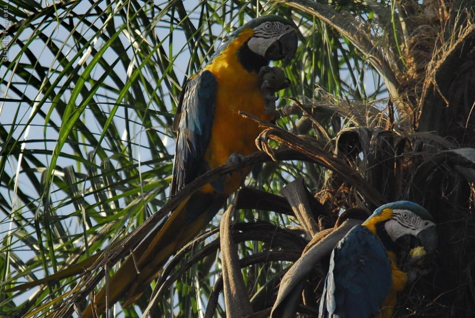 vg_pantanal-2008_27