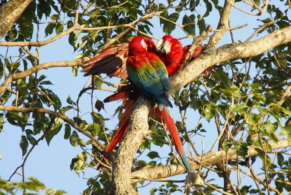 vg_pantanal-2008_28