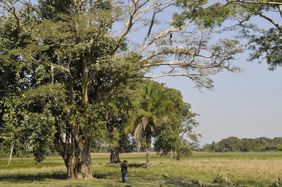 vg_pantanal-2008_30