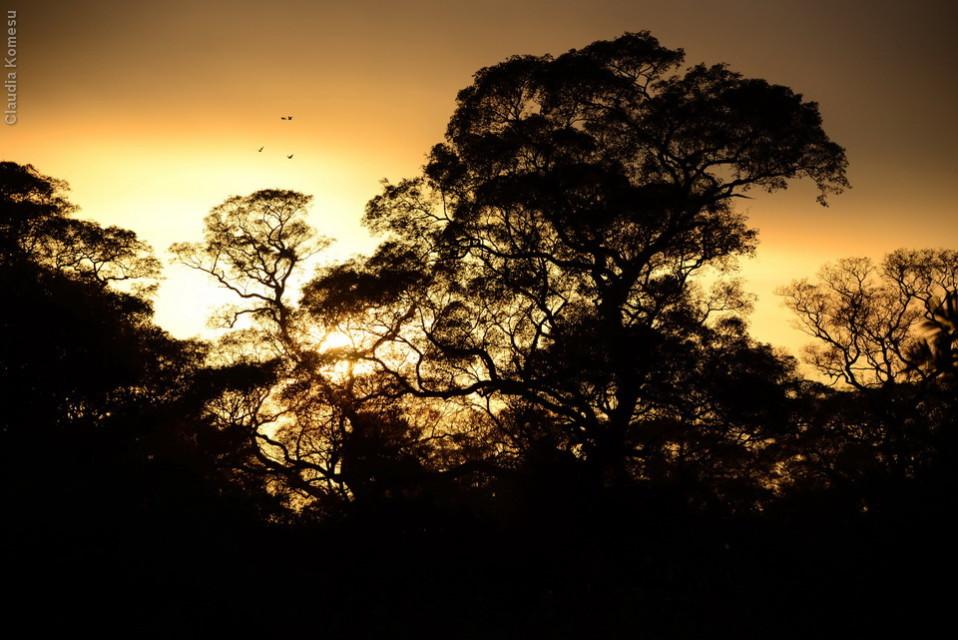 vg_pantanal2013_10
